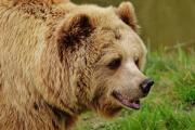 bear-1315128_1280.jpg